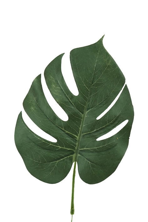 Blad Monstera Grön