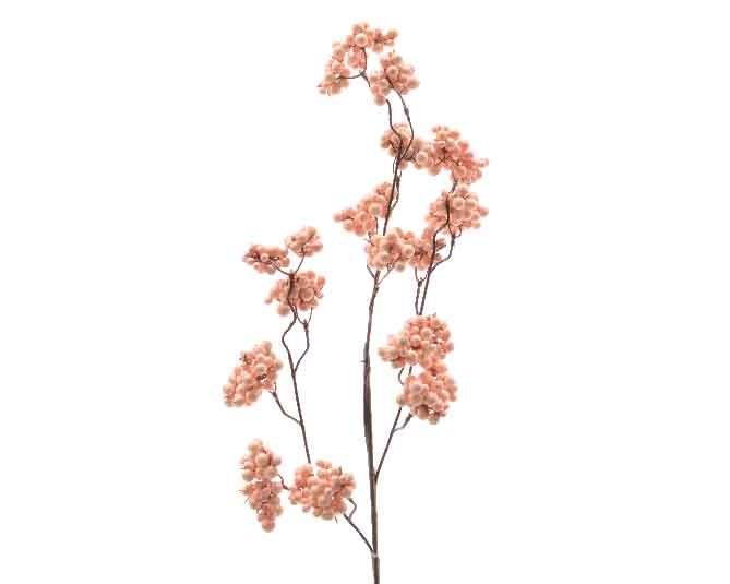 Kvist Berry Aprikos